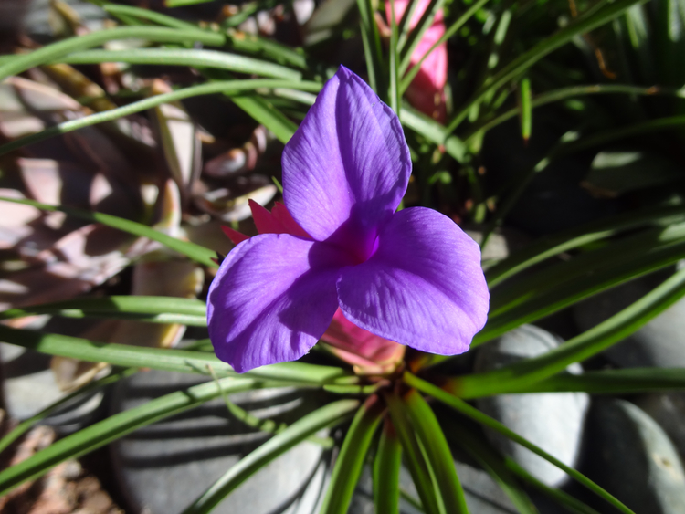 Florida flowers Bridgehampton Florist