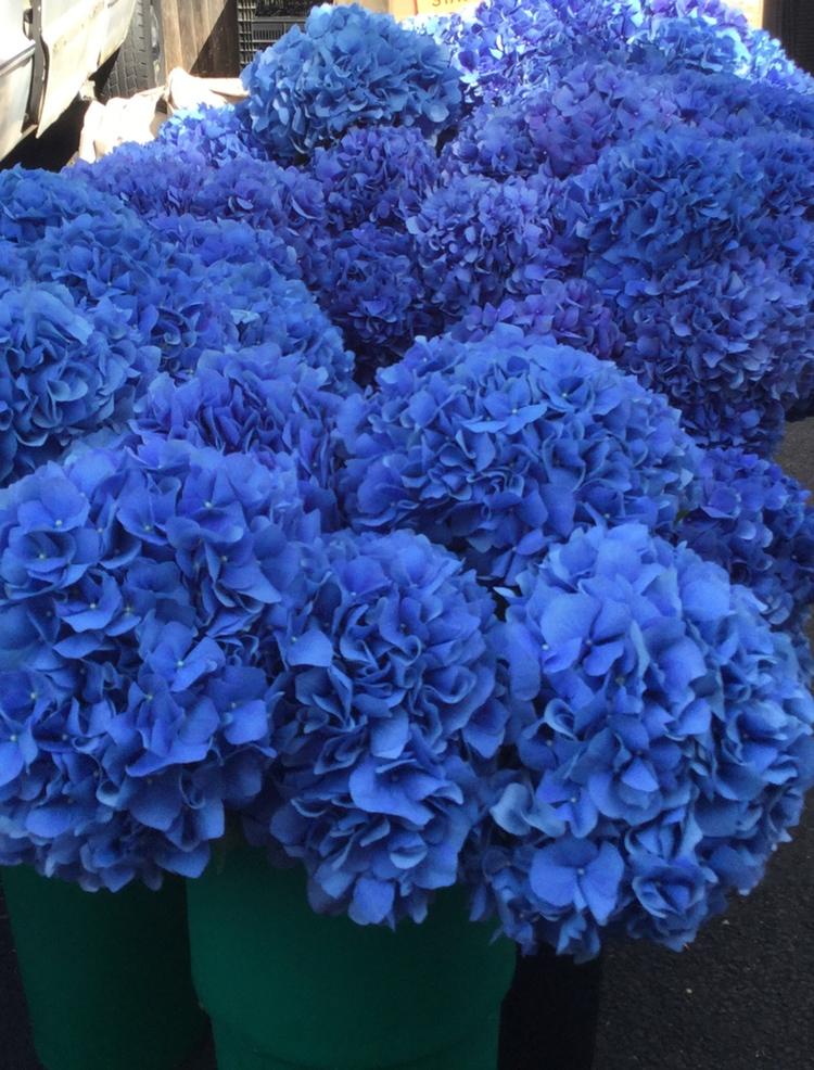 Blue Hydrangeas Decor